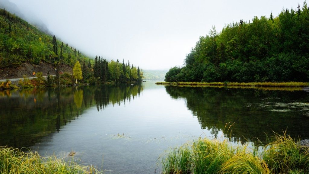 water, trees, wilderness